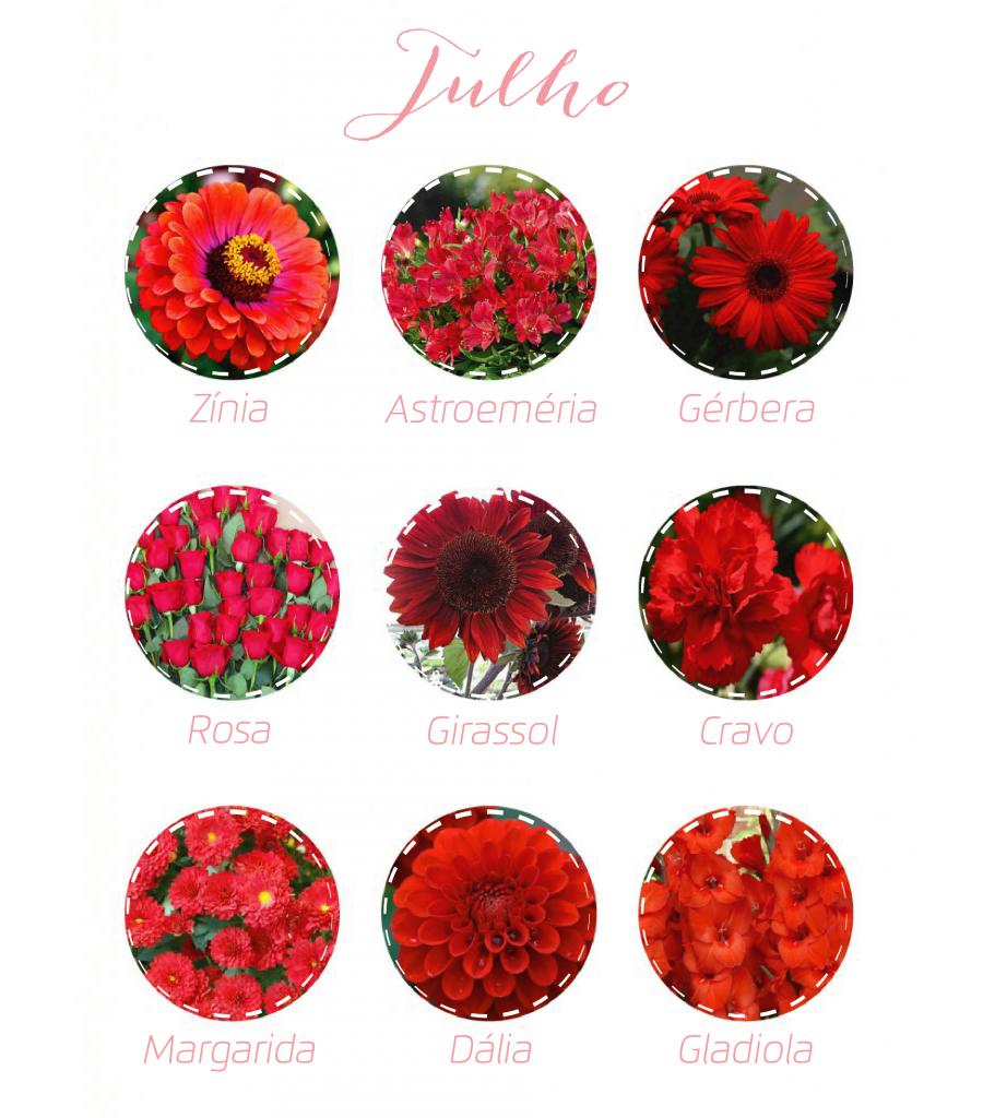 Flores julho